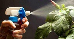 Борьба с вредителями и болезнями комнатных растений