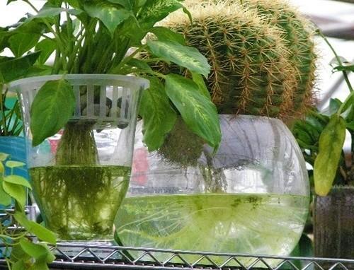 Гидропоника - растения в воде