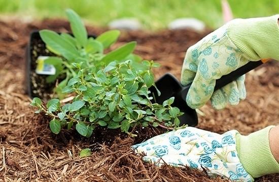 Мульчирование также относят к современным способам улучшения земледелия