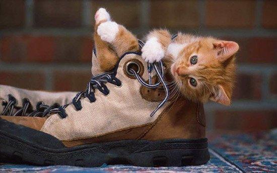 Почему коты и кошки метят квартиру?