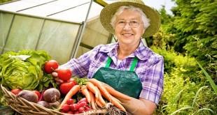 Планируя будущие посевы, надо в первую очередь учесть порядок чередования культур