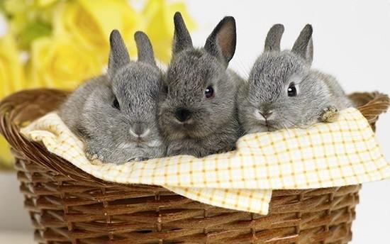 Крольчата в корзине