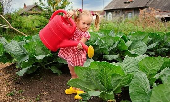 Белокочанная капуста - изумительный овощ, который не сходит с нашего стола круглый год