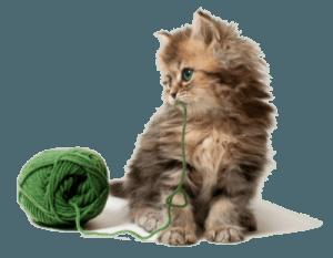 Котенок с зеленым клубком