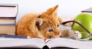 Рыжая кошка читает с очками книгу