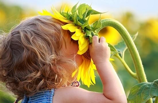 Флоротерапия: лечение с помощью цветов