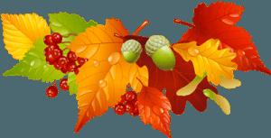 Осенние листья ягоды желуди