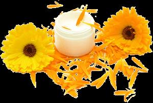 Цветки календулы и баночка крема