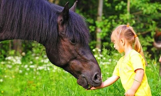 Маленькая девочка кормит лошадь с руки