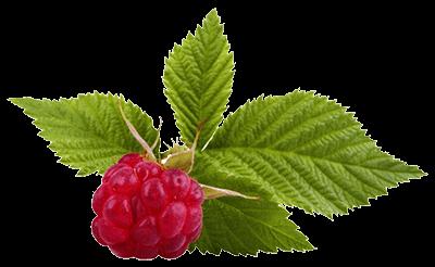 Листья малины с ягодой