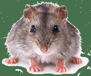 Серая мышка