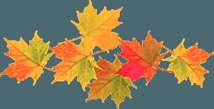Осенние кленовые листья