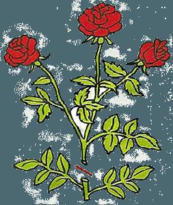 Обрезка роз - срез между второй и третьей веточкой