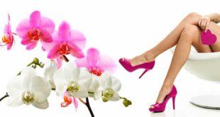 Женские ноги и орхидея