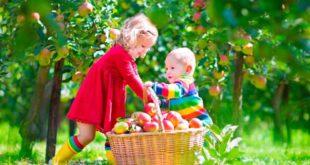 Дети с корзиной яблок