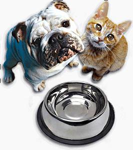 Собака и кошка с пустой миской
