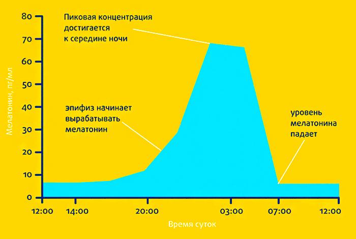 Изменение уровня мелатонина в течении суток