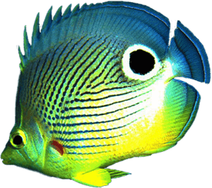 Океаническая рыбка