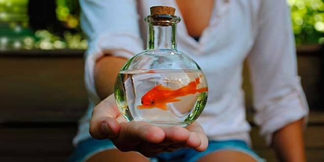 Золотая рыбка в бутылке
