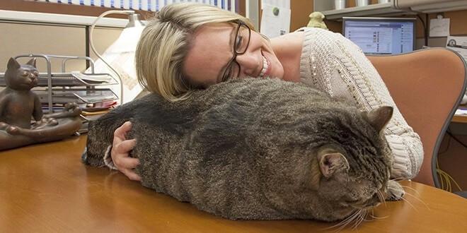 Девушка обнимает очень толстого кота