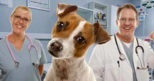 Собака и врачи