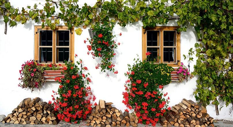 Окна с цветами