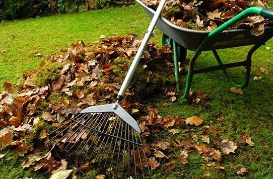 Газон освобождают от мусора, опавших листьев и сухой травы
