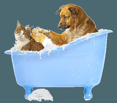 Банный день - кот и собака в ванной