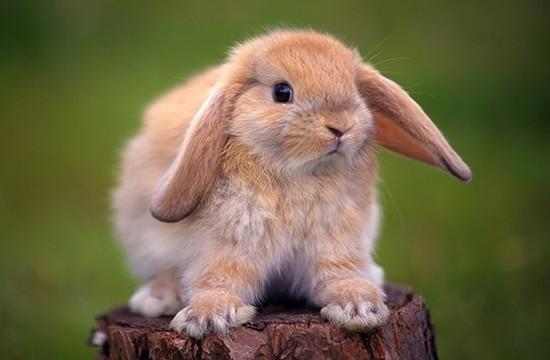 Кролик станет вашим отличным приятелем