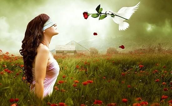 """Медитация """"Розовый куст"""" - женщина, голубь и роза"""