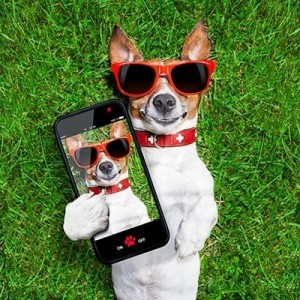 Собака с телефоном делает селфи