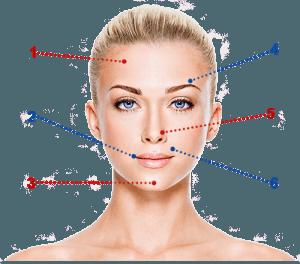 Женское лицо - схема
