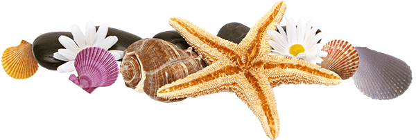 Массаж морскими раковинами