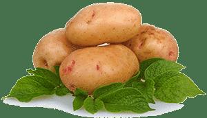 Картофель с листьями