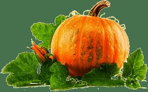 Тыква с листьями
