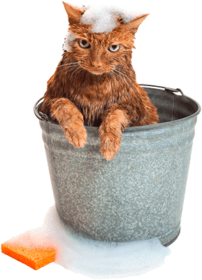 Кошка моется в ведре