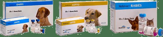 Разные вакцины для собак